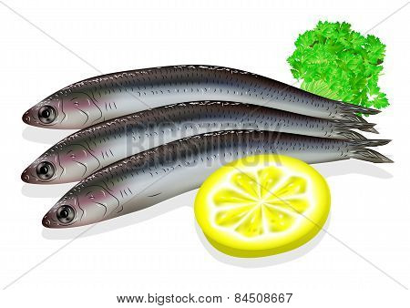 Food Anchovy