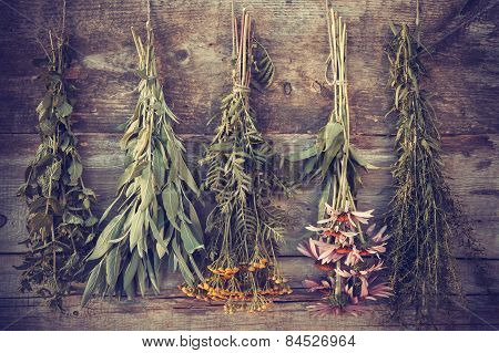 Vintage stylized photo of bunches of healing herbs on wooden wall herbal medicine. poster
