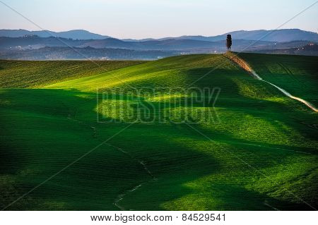 Tuscany, Cypress Tree On Hill And Green Fields On Sunset. Siena Orcia, Italy.