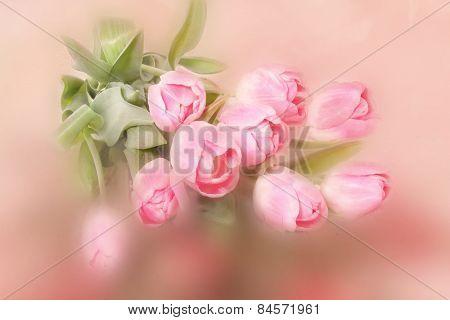 Textured Tulips
