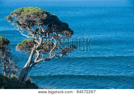 Tree Above The Sea