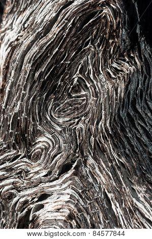 close up of ancient bog-wood texture