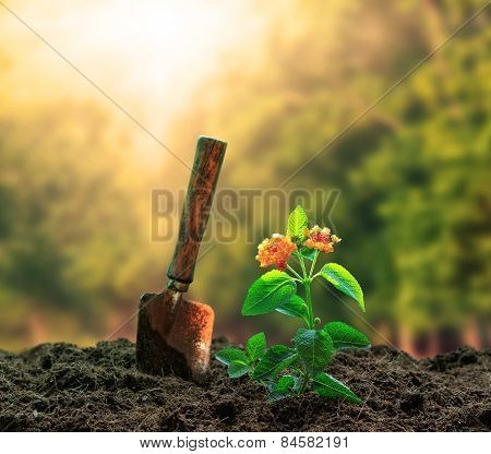Flowers Plant And Gardening Tool Agaisnt Beautiful Sunlight In Green Park Use For People Activities