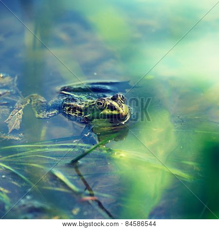 Alone frog into the summer pond sesonal backgrounds