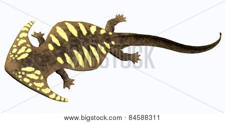 Diplocaulus Permian Amphibian