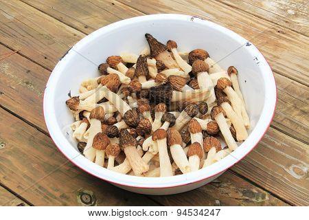 White Dishpan with Morel Mushrooms