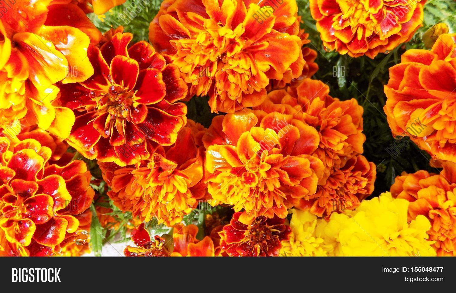 Flowers Bright Image Photo Free Trial Bigstock