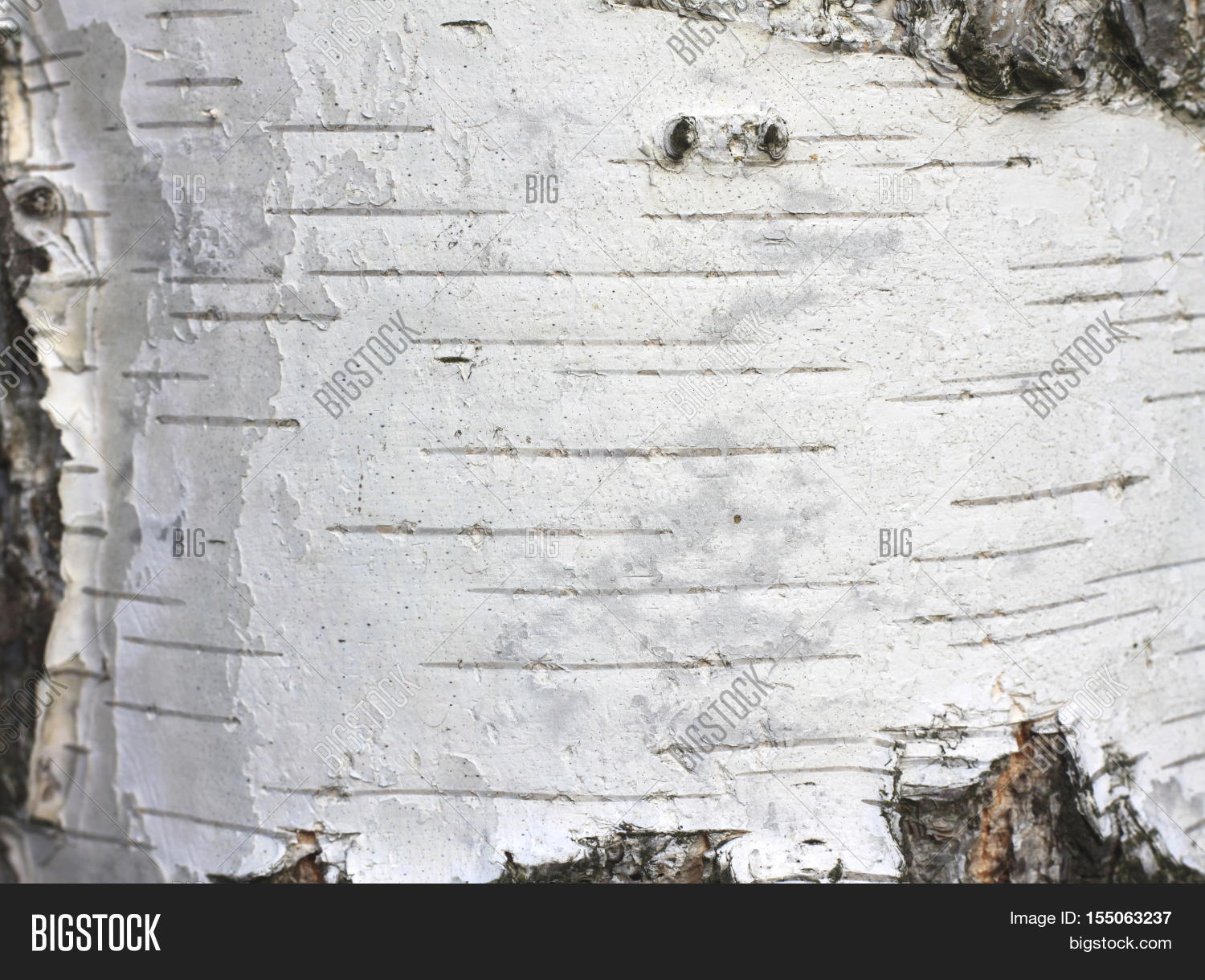 Perfect Birch Bark Texture Image & Photo (Free Trial) | Bigstock JQ83