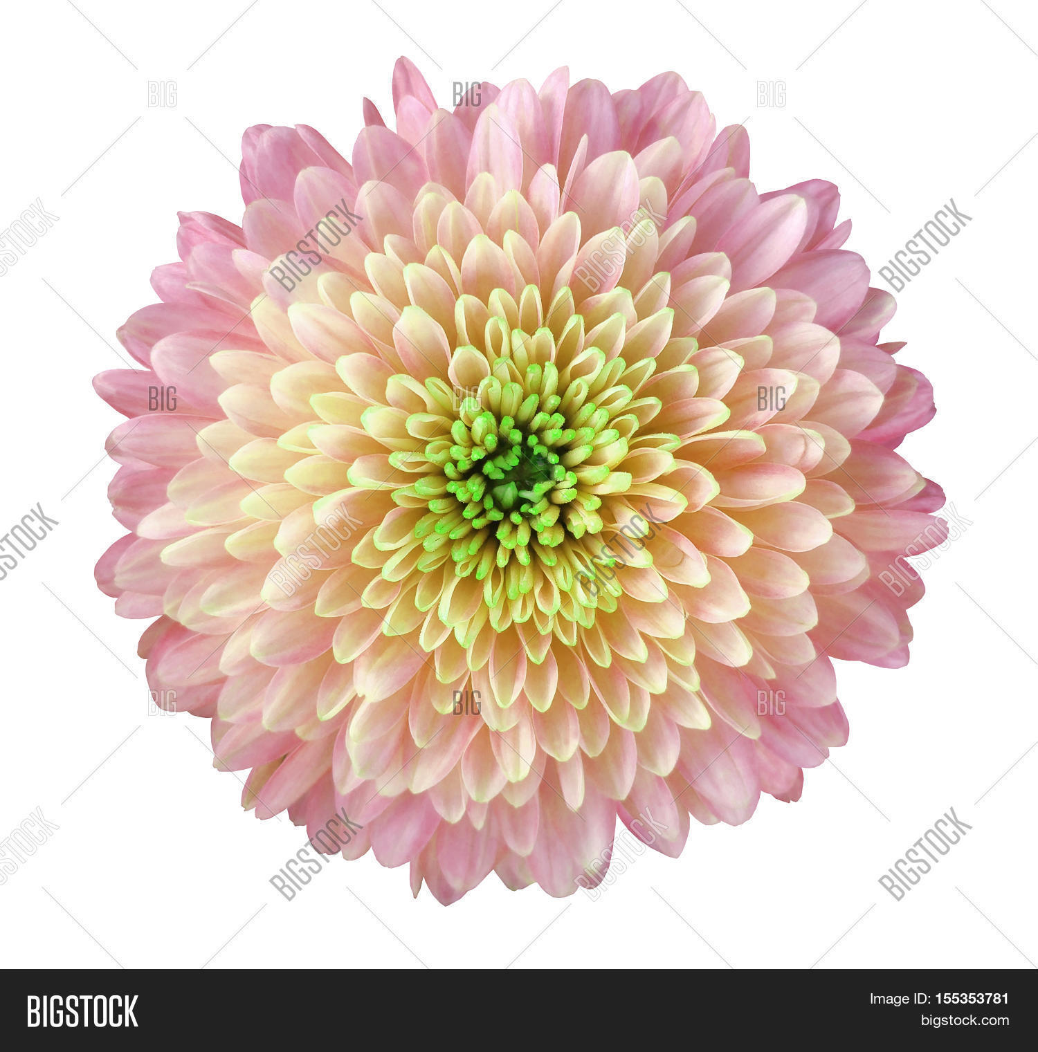 Light Pink Yellow Image Photo Free Trial Bigstock
