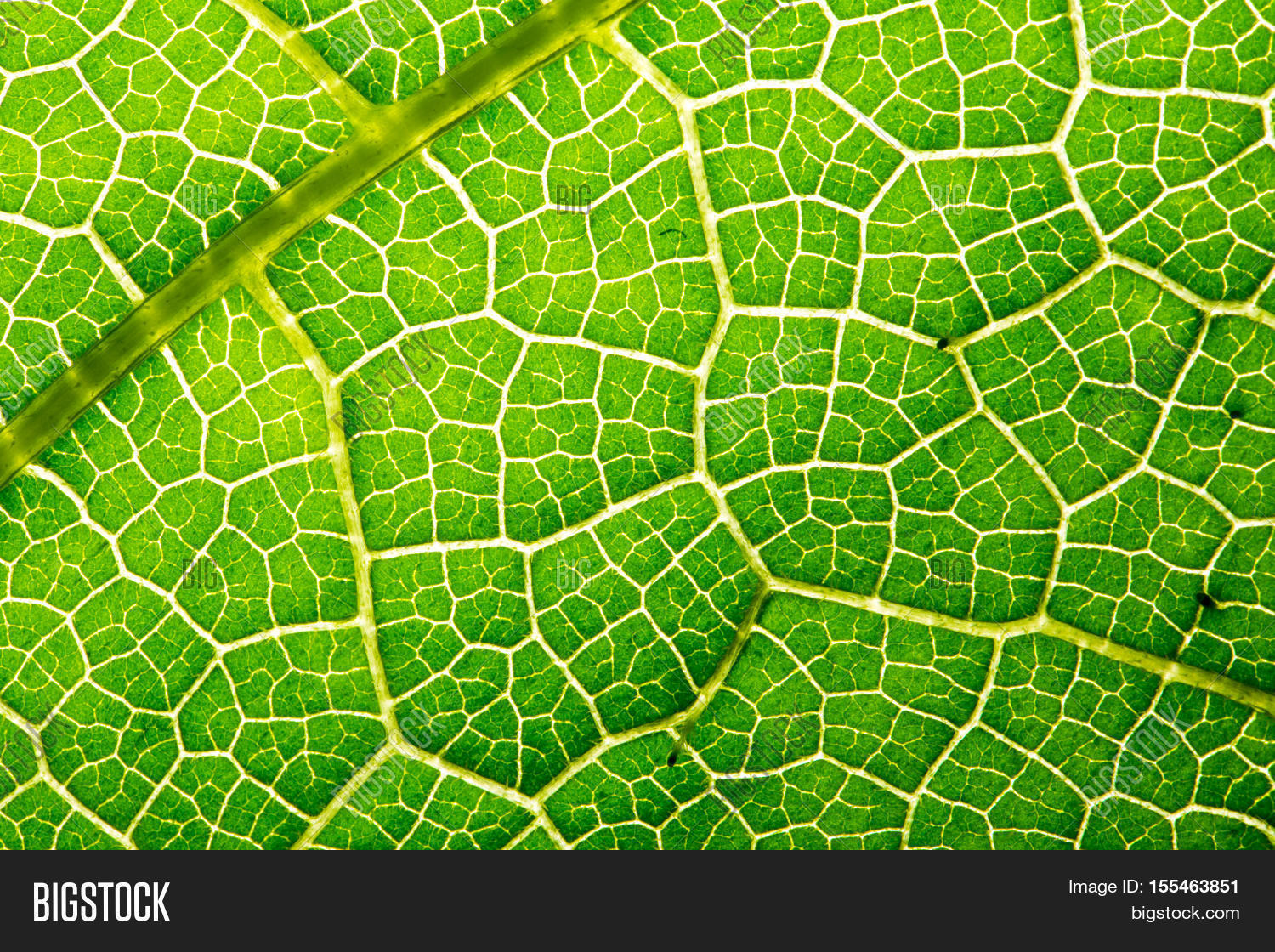 Fresh Leaf Texture Image Photo Free Trial Bigstock