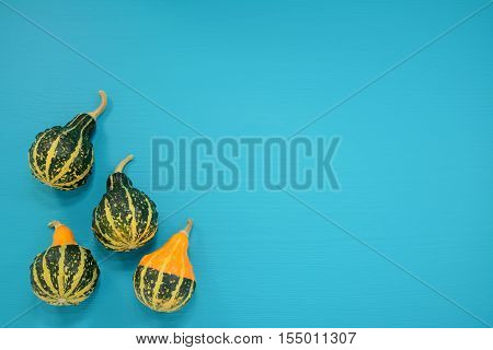 Green And Yellow Ornamental Gourds On Bright Blue Background