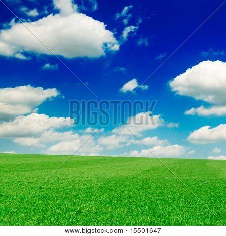 veld op een achtergrond van de blauwe hemel