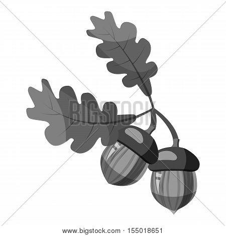 Oak branch with acorns icon. Gray monochrome illustration of oak branch with acorns vector icon for web