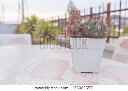 Cactus in pot on marble table. pastel color or vintage style. copy space background and soft or select focus