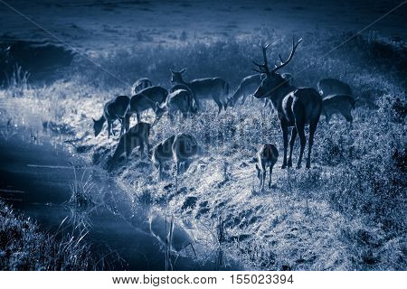 Deer Standing On The Frozen Meadow Near The River At Moonlight
