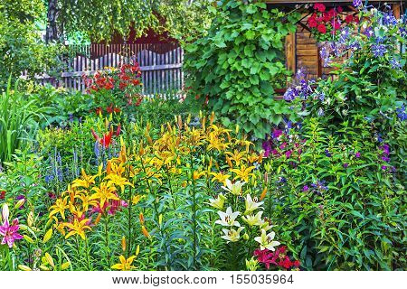 The flower garden at the cottage. Siberia Novosibirsk oblast Russia