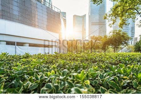 view of downtown with green bushes,Shanghai in China.