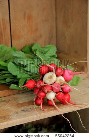 Bunches of fresh picked radishes on shelf of wood crate at market.