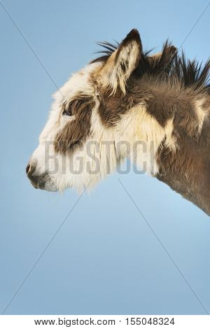 Closeup side view of a donkey against clear sky