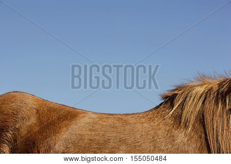 Side view of a brown horse against blue sky