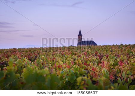 Leaves On Vine During Autumn Season In Beaujolais Land, France
