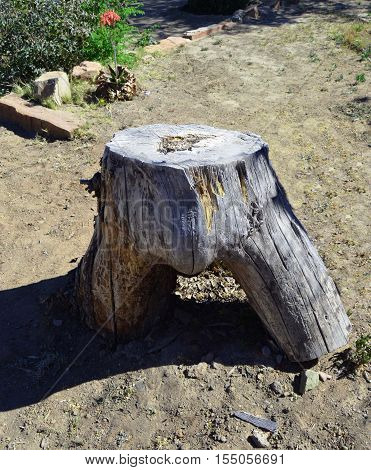 Funny trunk tree stump groin old ground