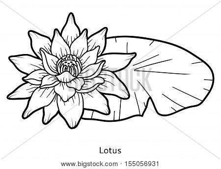 Coloring book for children, colorless flower Lotus