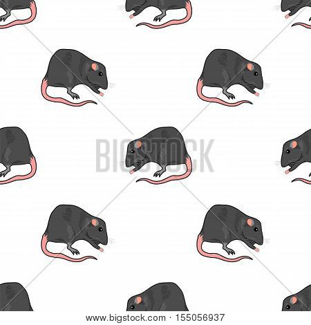 Domestic Rats Isolated on White Background. Rodent Seamless Pattern