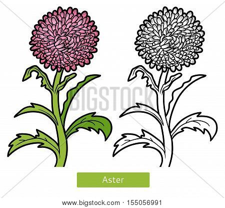 Coloring book for children, flower pink Aster
