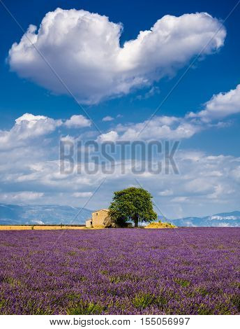 Summer in Valensole with lavender fields, stone house and heart-shaped cloud. Summer in Alpes de Hautes Provence, Southern French Alps, France
