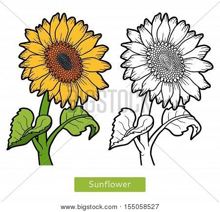 Coloring book for children, coloring page, flower Sunflower