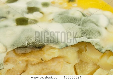 Moldy pudding. Poisonous food full of mold. Unhealthy food. Spores of the fungus for food. Growing mold.