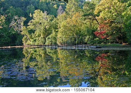 fall foliage just beginning to change colors in early autumn, reflected in the water of a pond