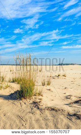 Dutch national park Loonse en Drunense Duinen with sand drifts and clumps of grasses on a sunny day in the summer season.