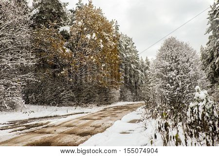 Small country road in winter with sunshine on trees