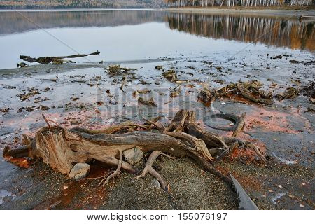 The roots of trees and debris lie on the river Bank