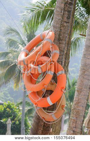 Life Buoy on coconut tree - Life guard