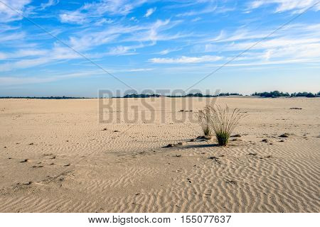 Two tufts of grass in a desertlike wide area in the Dutch National Park Loonse en Drunense Duinen in the province of North Brabant.