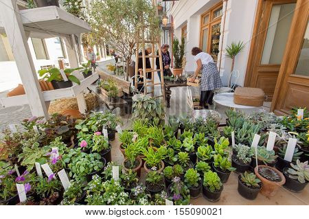 TBILISI, GEORGIA - OCT 9, 2016: Many green cactuses in pots and succulents on a showcase of street flower shop on October 9, 2016. Tbilisi has a population of 1.5 million people