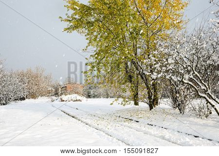 Quercus rubra - Red Oak tree with fallen leaves on snow on a country road in early November