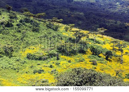 Tanzanian flowering valley Ngorongoro Crater Conservation Area, Tanzania. East Africa