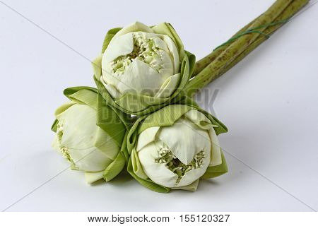 White lotus for Buddhist begging isolated on white background.