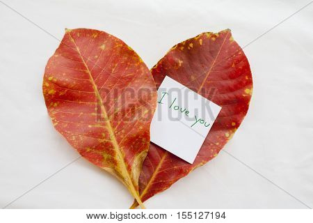 i love you feeling message card and two red leave in autumn on background white