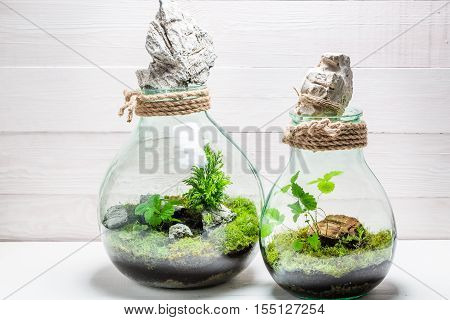 Small Rain Forest In A Jar, Save The Earth Idea