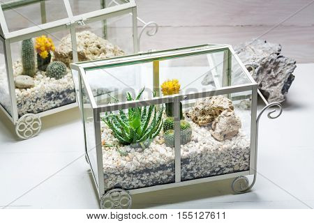 Live Cactus In A Terrarium With Self Ecosystem
