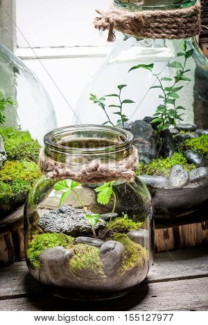 Stunning Rain Forest In A Jar, Save The Earth Concept