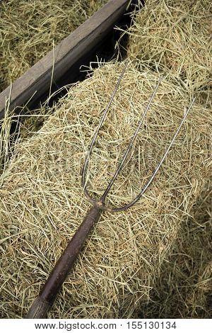 Pitchfork lays in the barn hay rural farm