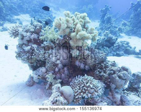 Coral reef at the bottom of tropical sea underwater.