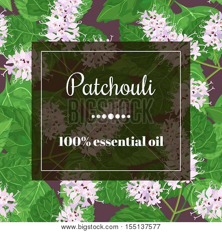 Patchouli 100 essential oil. Square semitransparent banner with herbal elements at background.
