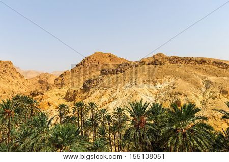 Landscape Of Oasis In The Canyon In Stone Desert.